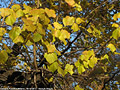 Tardo autunno ai giardini - Giardini Pubblici 9.