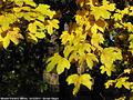 Tardo autunno ai giardini - Giardini Pubblici 4.