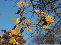 Tardo autunno ai giardini - Giardini Pubblici 8.