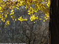 Tardo autunno ai giardini - Giardini Pubblici 2.
