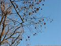 Tardo autunno ai giardini - Giardini Pubblici 5.