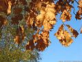 Tardo autunno ai giardini - Giardini Pubblici 11.