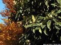Tardo autunno ai giardini - Giardini Pubblici 12.