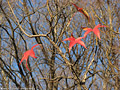 Tardo autunno ai giardini - Giardini Pubblici 10.